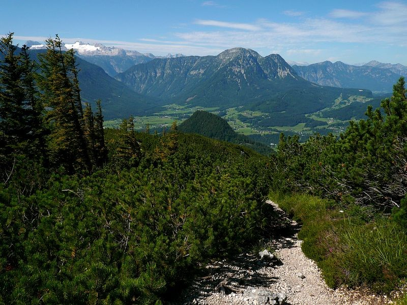 Beim Abstieg war es in der Latschenregion sehr heiß