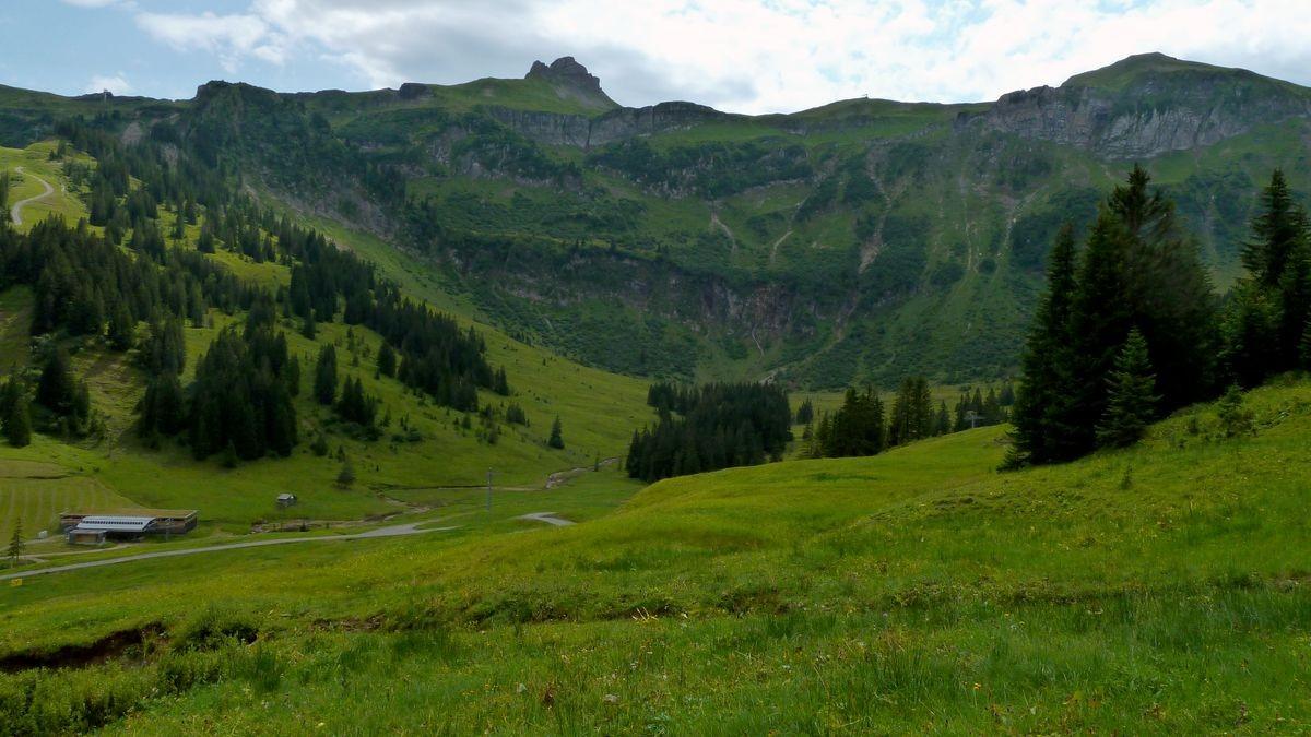 Damülser Mittagspitze und Hochblanken vom Weg Roßstelle - Wildguntenalpe