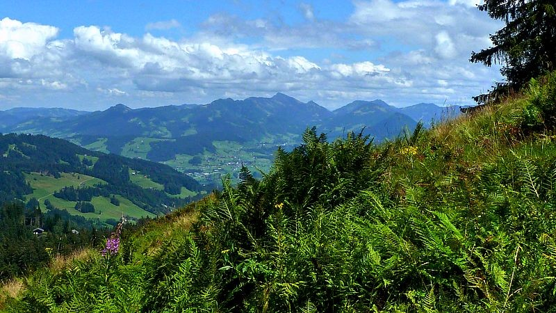 Aussicht vom Aufstiegsweg Obere Lose - Älpelekopf auf die Allgäuer Alpen