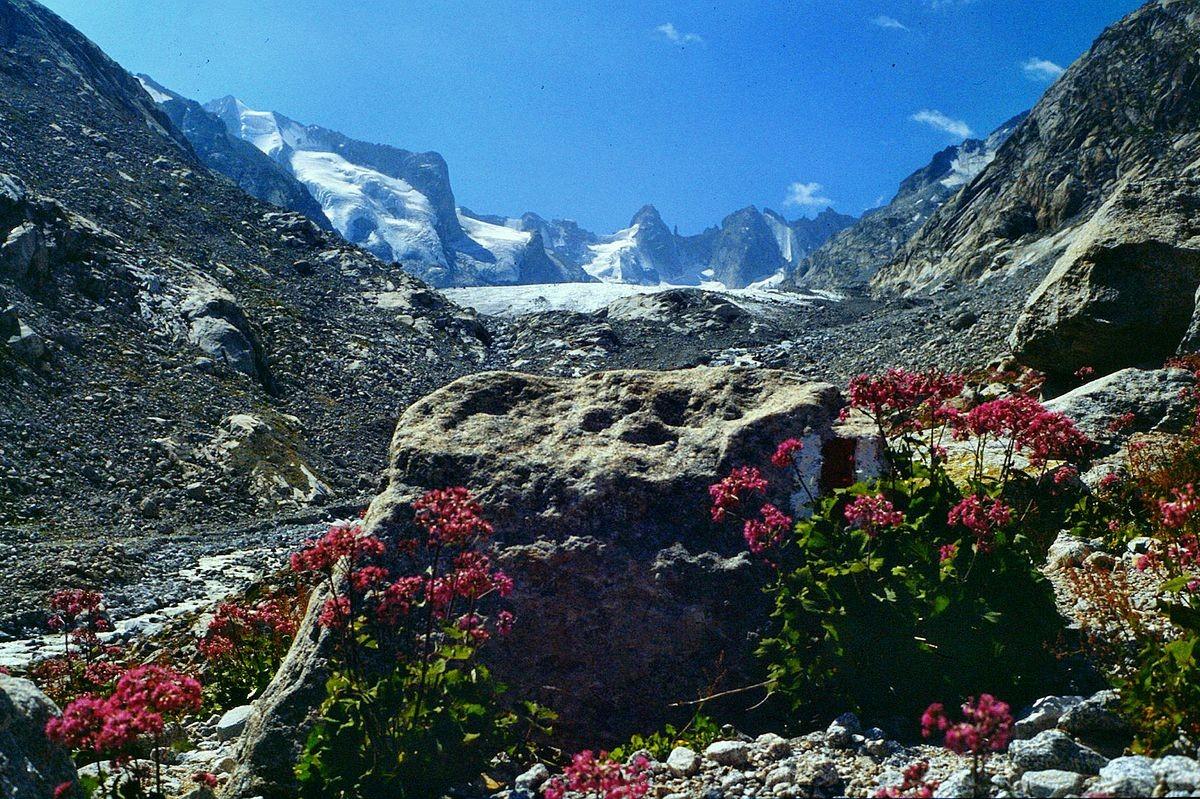 Alpendost im Blockwerk des Val Forno, Foto von 1986