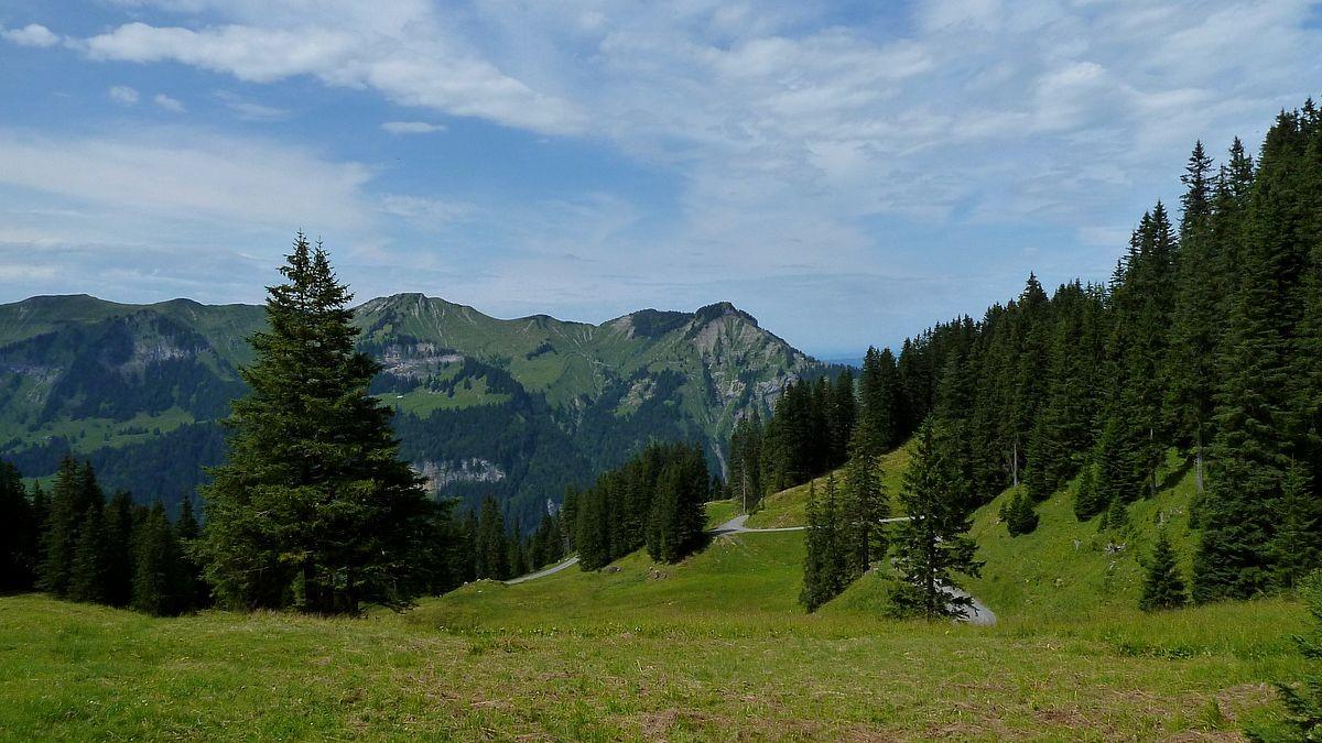 Blick vom Sattel bei der Wildguntenalpe auf den nördlich gelegenen Mörzelkamm mit der Hangspitze.
