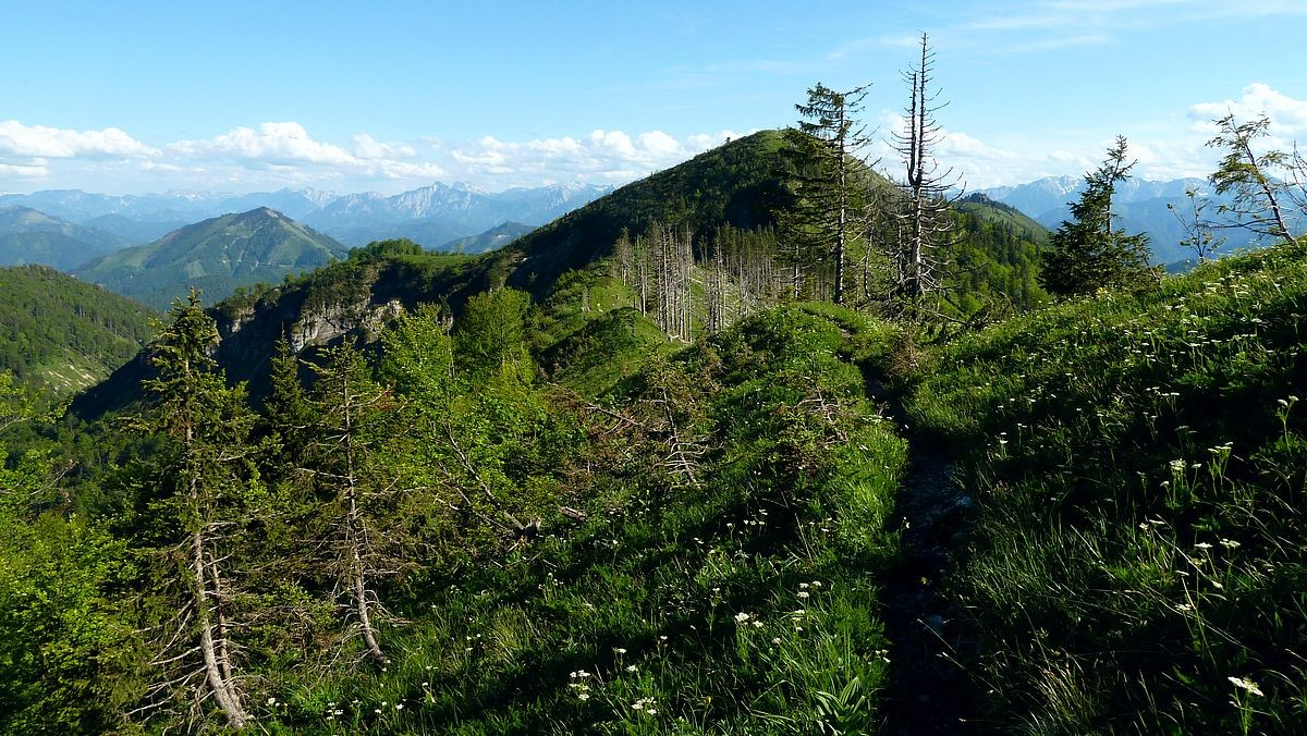 Almkogel vom Weg auf's Brunnbacheck