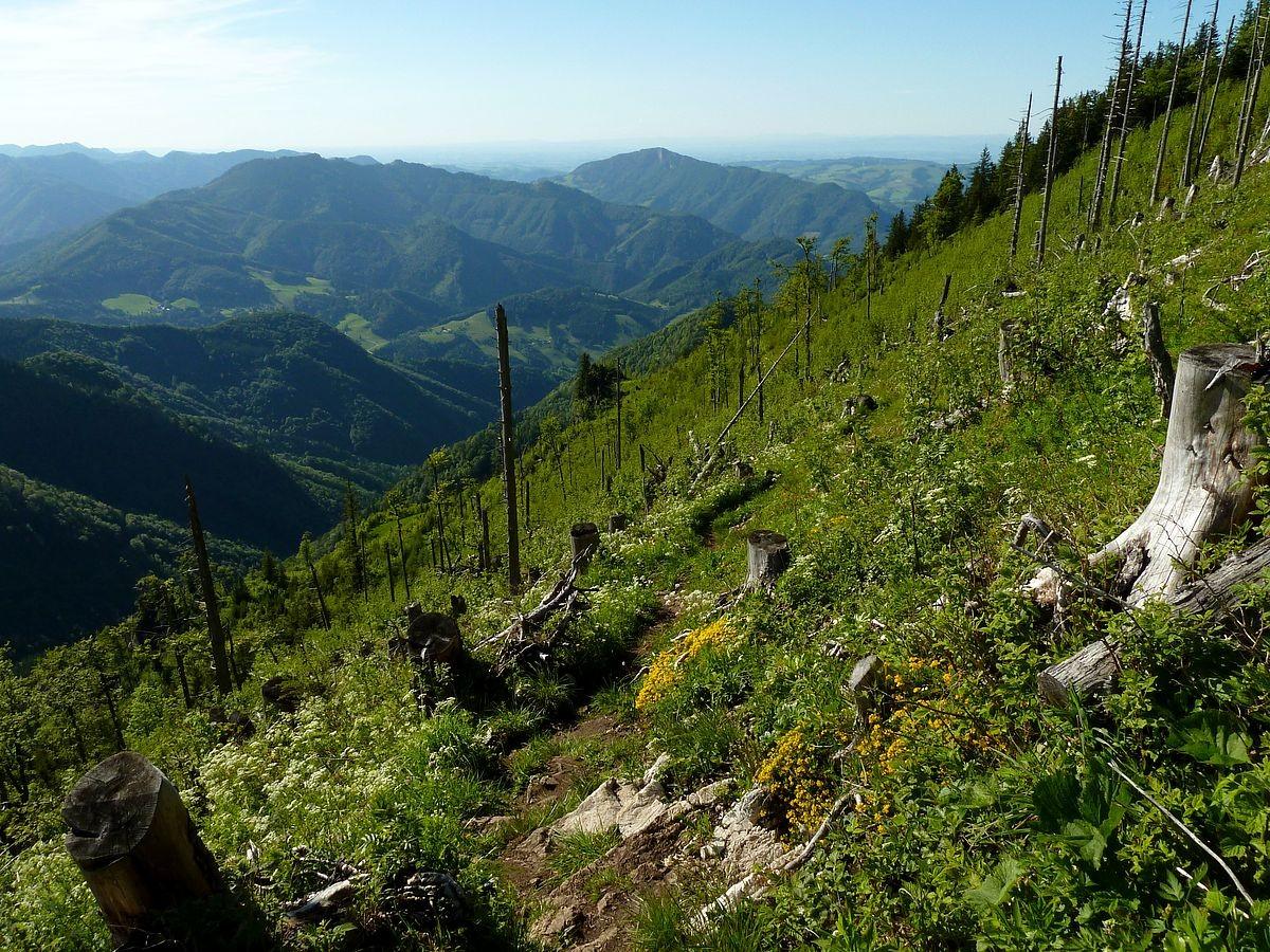 Abstieg vom Almkogel mit Blick über das Reichraminger Hintergebirge
