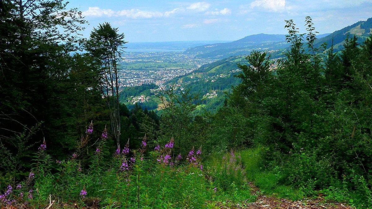 Blick vom Karren auf Bregenz, Bodensee und Pfänder