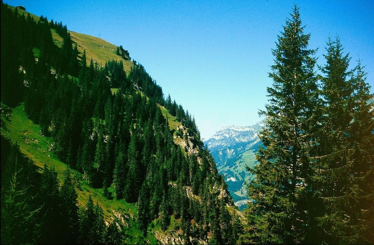 Die Golitschealp vom Aufstiegsweg