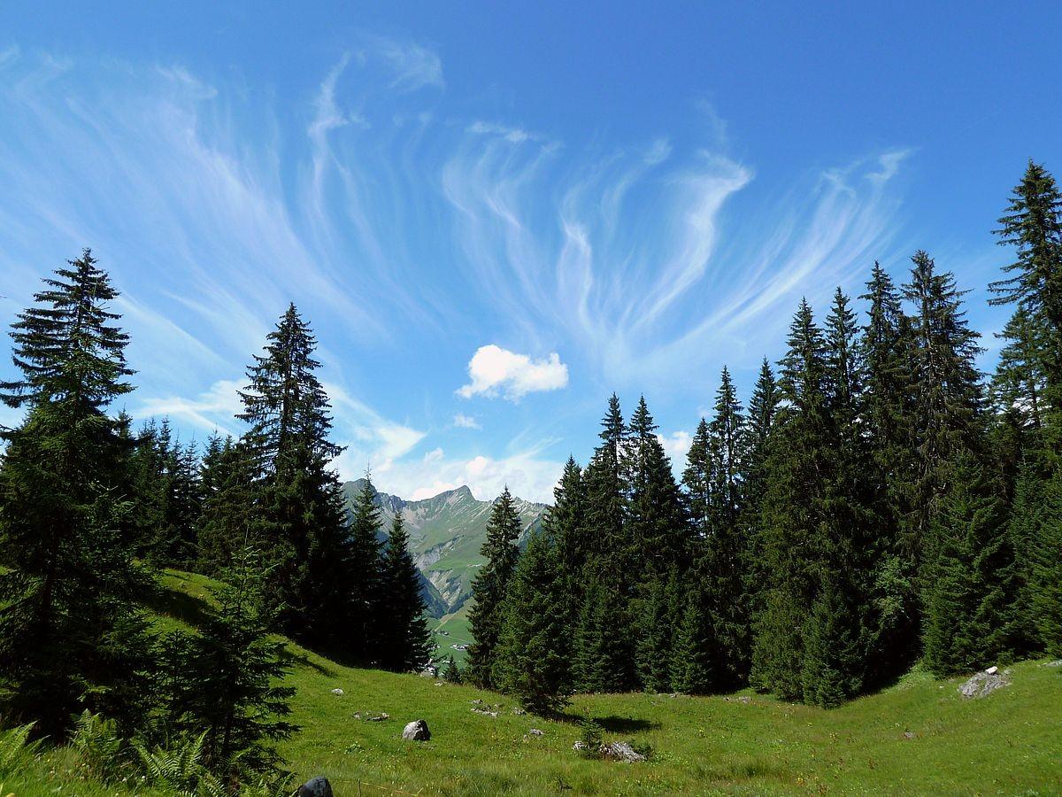 Auffallend gruppierte Federwolken vom Waldgebiet unter der Wandfluh