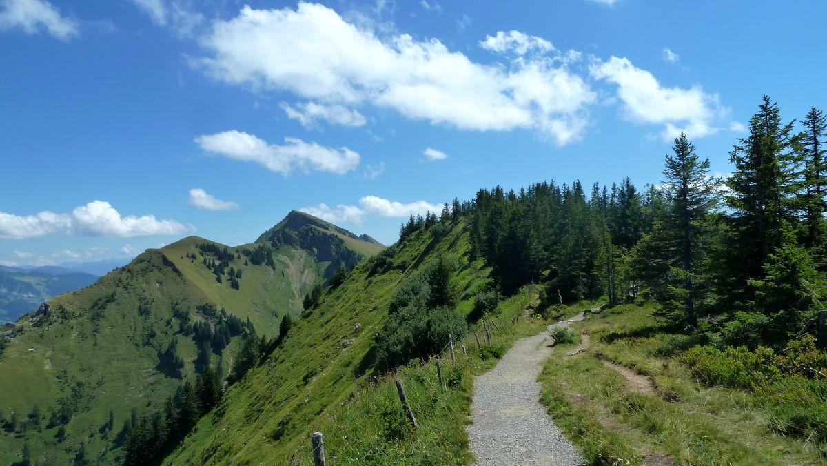 Foto von 08/2015: Weg auf der Vorderen Niedere. Die Winterstaude hinter dem Tristenkopf.