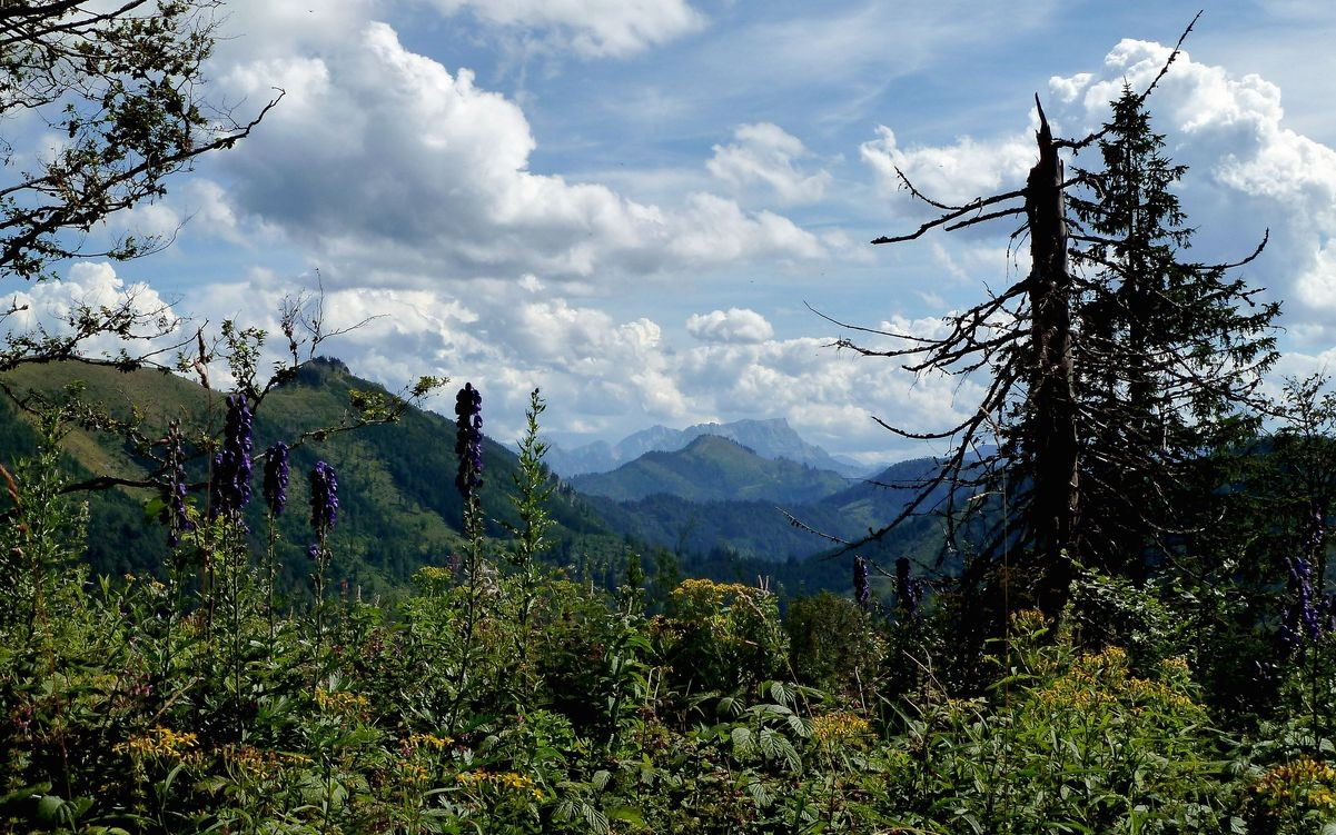 Beim Abstieg vom Gamsstein: Almkogel und Bodenwies, dahinter Gesäuseberge mit Gr. Brunnstein