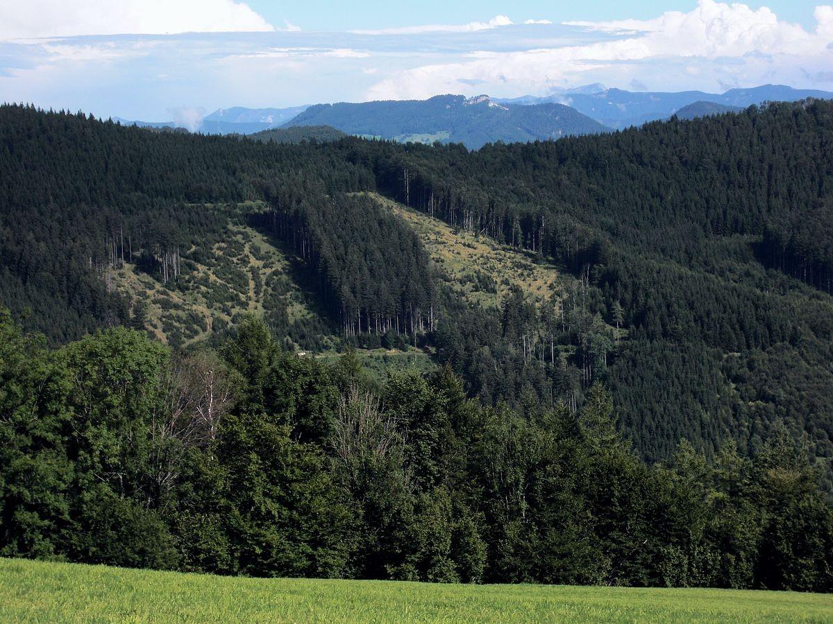 Lindaumauer hinter dem bewaldeten Kamm