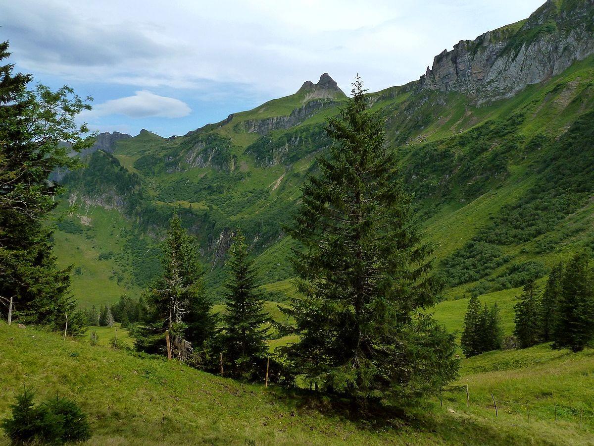 Damülser Mirttagspitze und Weidegebiet der Wildguntenalpe beim Abstieg zur Einsattelung vor dem Hochblanken