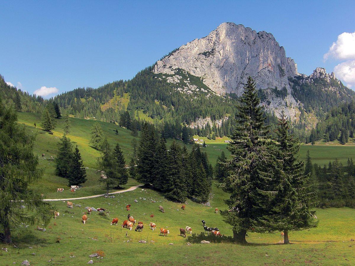 Blick über das Gebiet der Filzenmoosalm zum Stubwieswipfel. Standort : Aussichtswarte am Themenweg