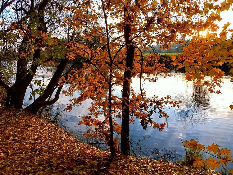 Herbsttag an der Regnitz in Fürth