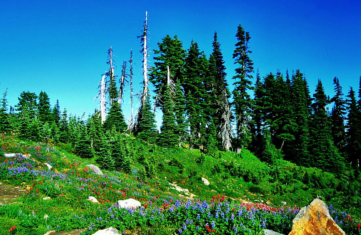 Indian Paintbrush, eine Art Rittersporn u.a. Bergblumen am Wegrand