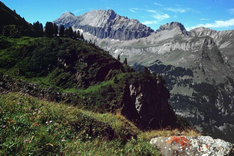 Arven am Steig zwischen Jegertosse und Fisialp