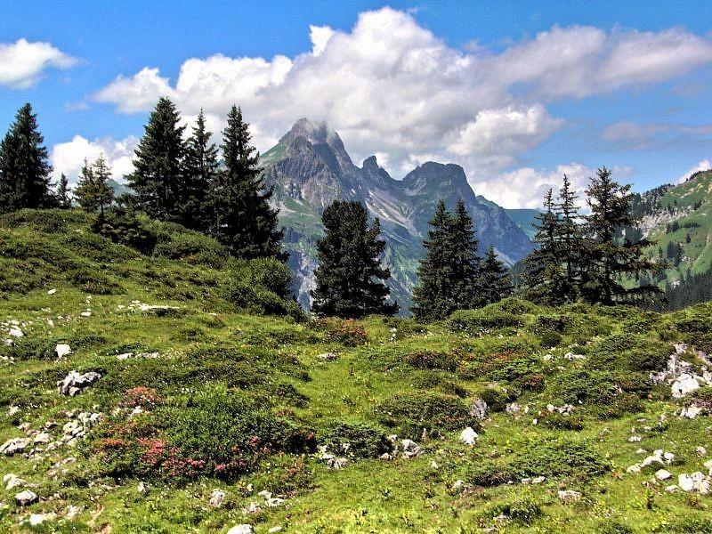 Wiese mit Alpenrosenbestand. Dahinter die Hochkünzelspitze.