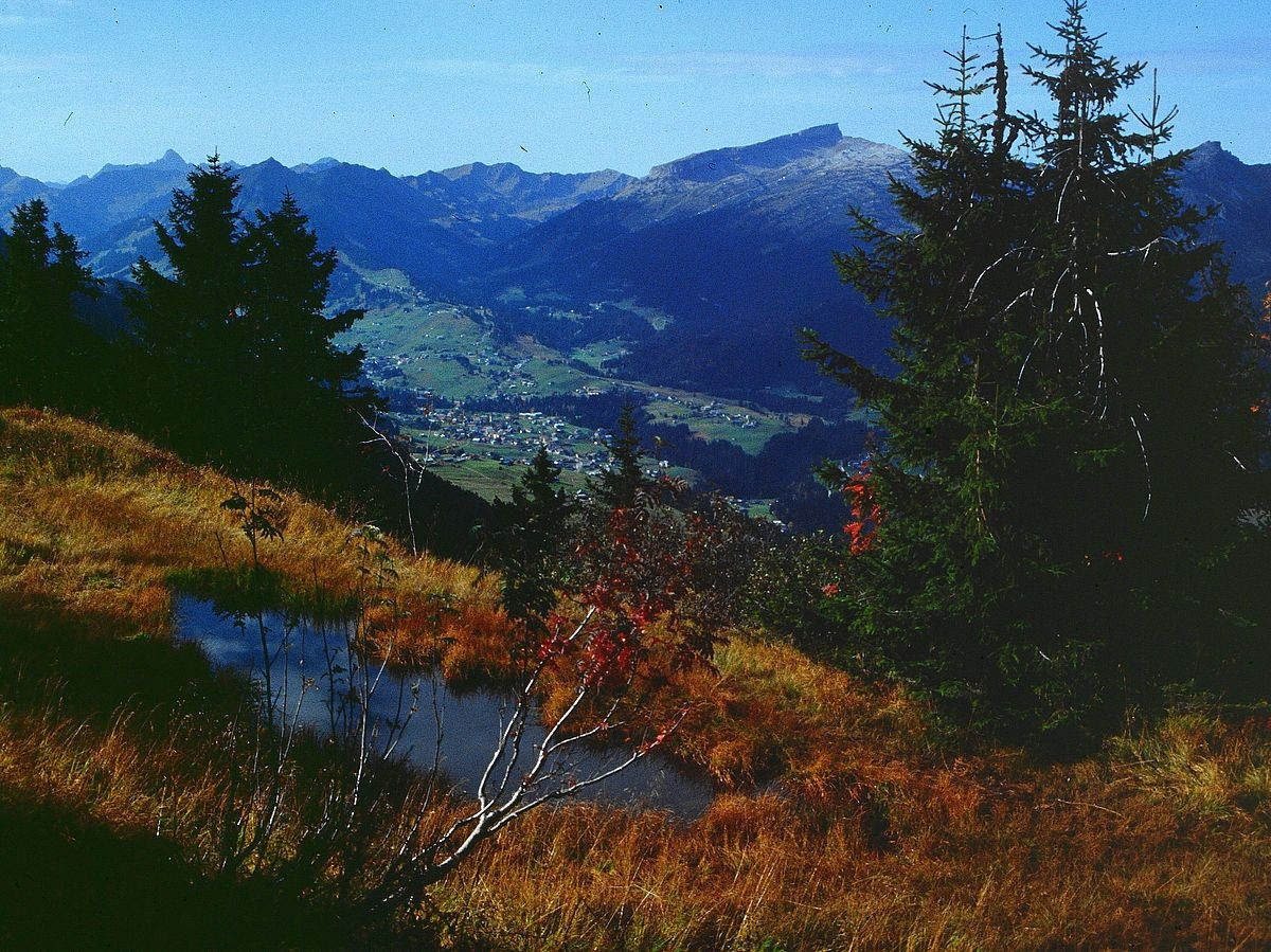 Kleiner Moortümpel am Söllereck. Blick ins Kleinwalsertal.