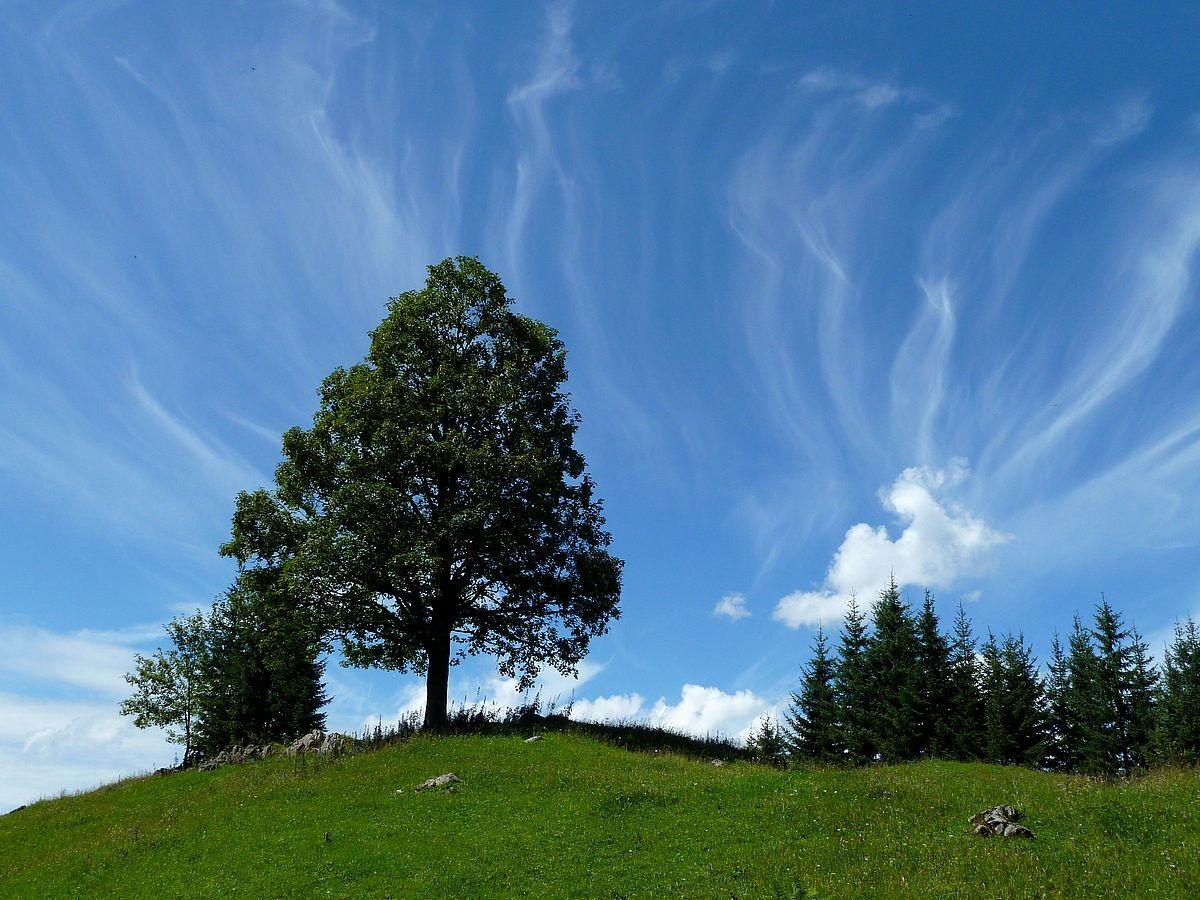 Auffallend gruppierte Federwolken
