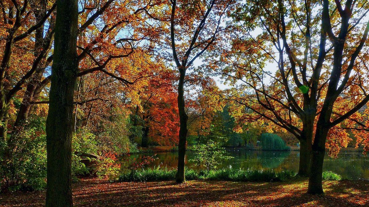 Herbststimmung am Weiher unterhalb des Stadtparkcafes. Foto vom 04.11.2011