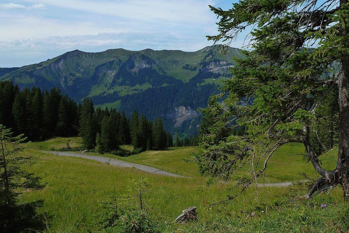 Einsattelung bei der Wildguntenalpe nach Rückkehr vom Kojenkopf. Im Hintergrund der Mörzelkamm.