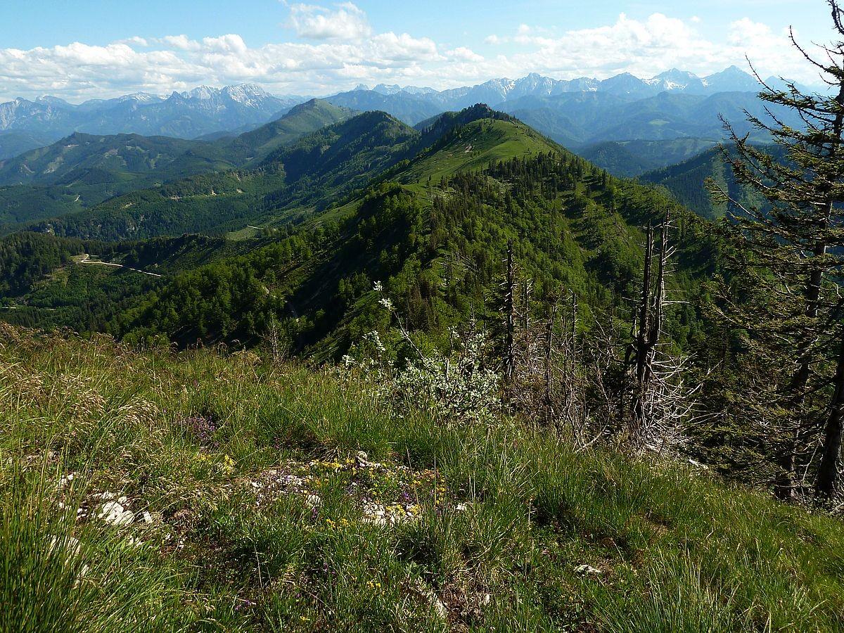 Blick vom Almkogel zur Bodenwies