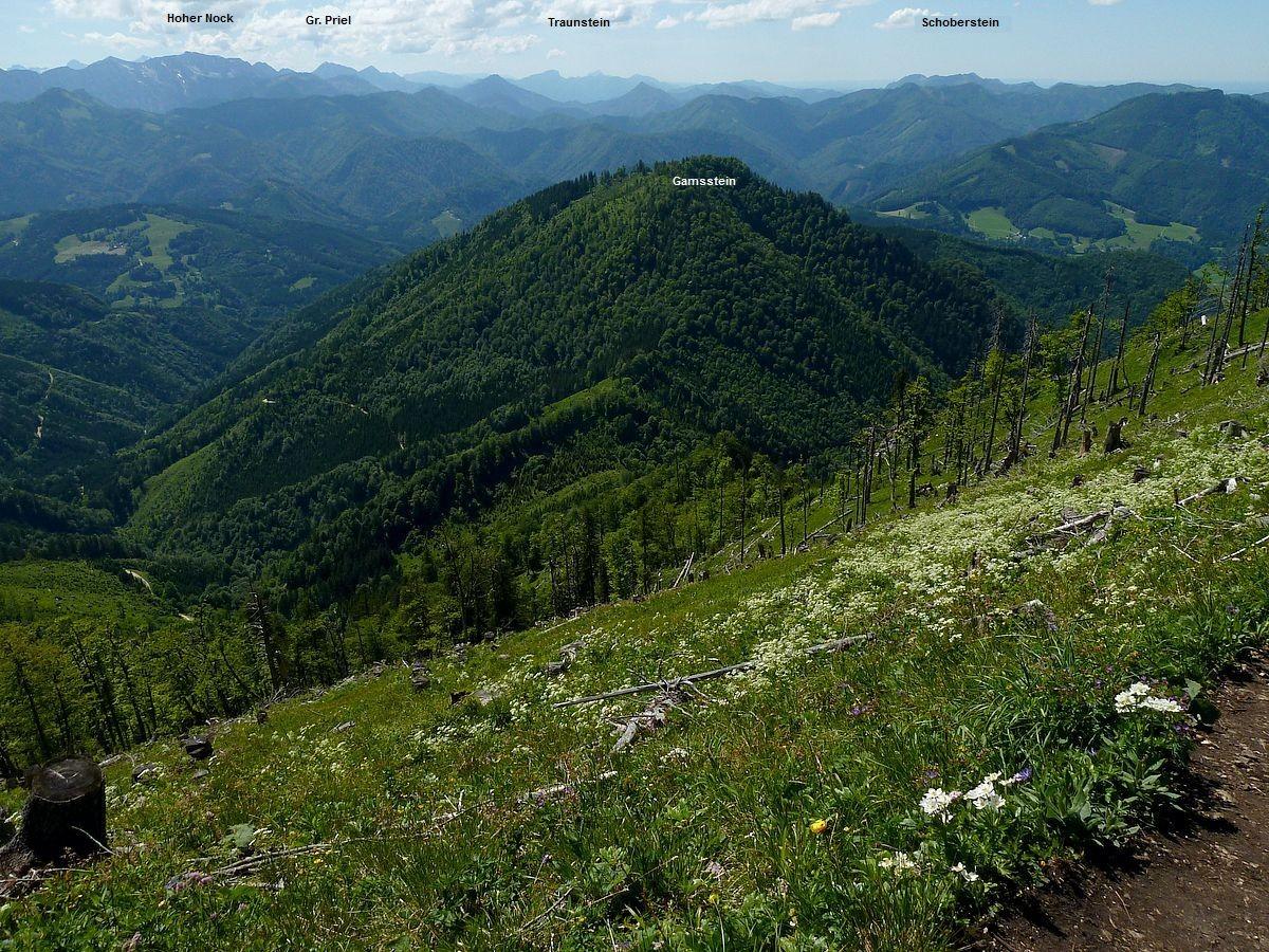 Blick vom Kammweg am Almkogel auf den Nationalpark Kalkalpen mit Hintergebirge und Sengsengebirge.