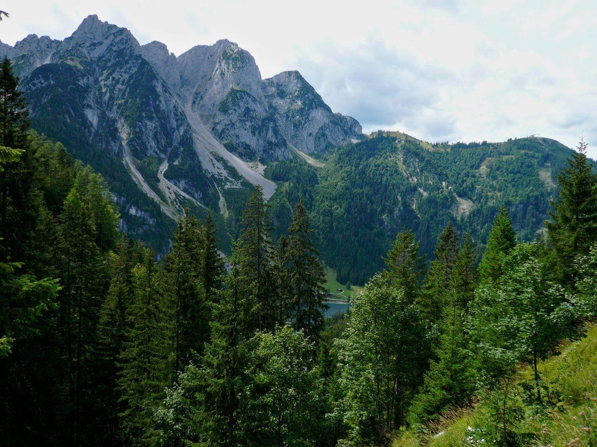 Gosaukamm aus dem Waldgebiet bei der Ebenalm