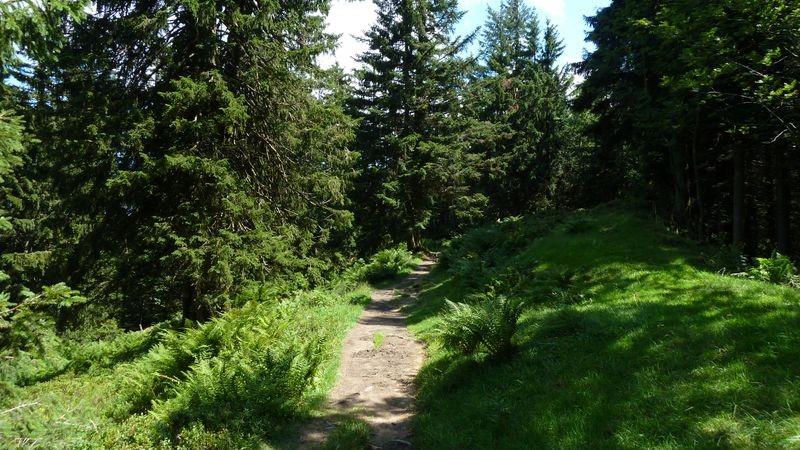 Auf dem 1 km langen, bewaldeten Kammweg zum Hochälpelekopf