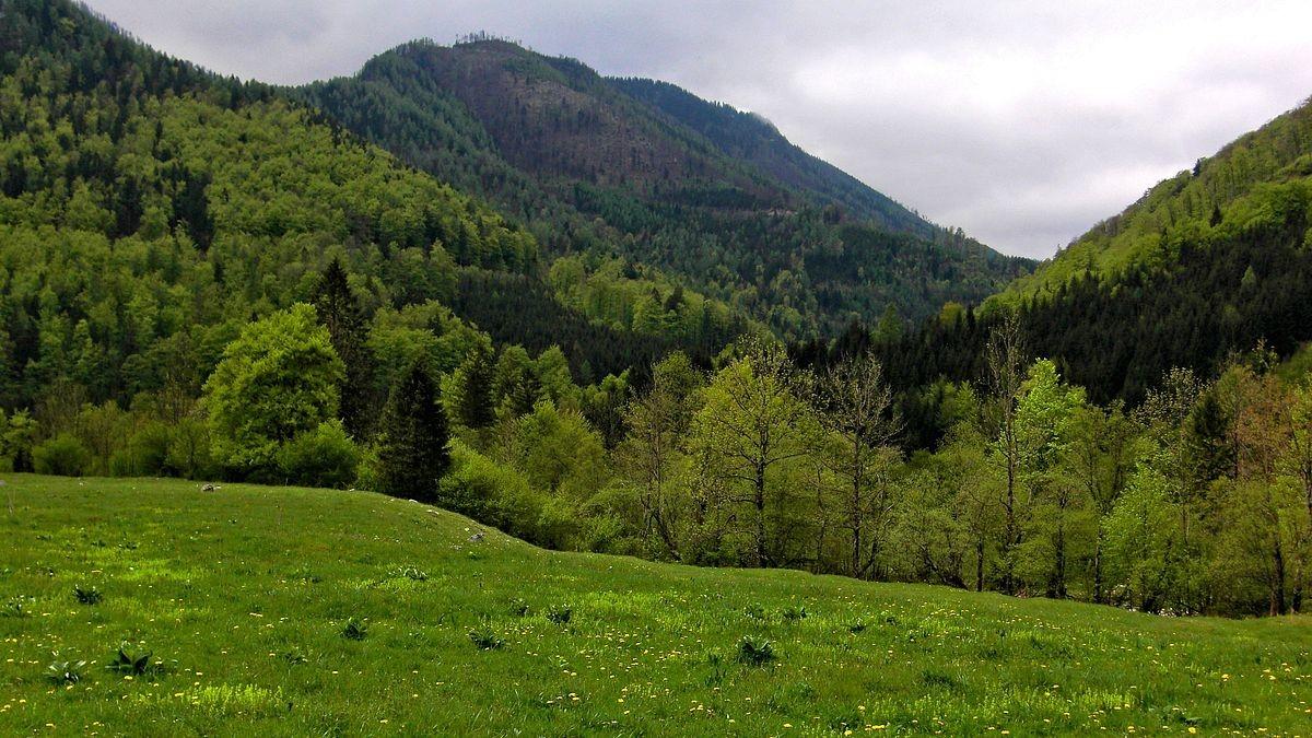 Blick Richtung Klausgraben, der stark bewaldet ist.