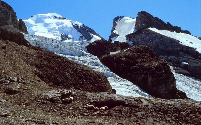 Schafe suchen Schutz vor der starken Sonneneinstrahlung im Schatten eines Felsen