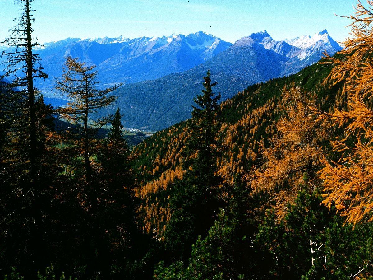 Lechtaler Alpen und Arzberg mit Lärchen vom Aufstiegsweg zur Wankspitze.