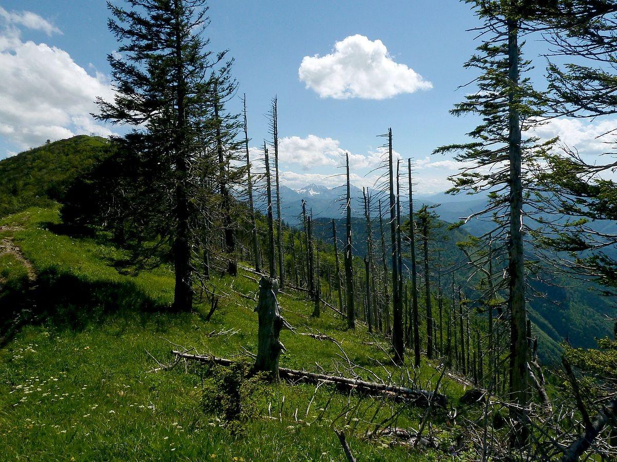 Im Nationalpark bleibt die Natur sich überlassen
