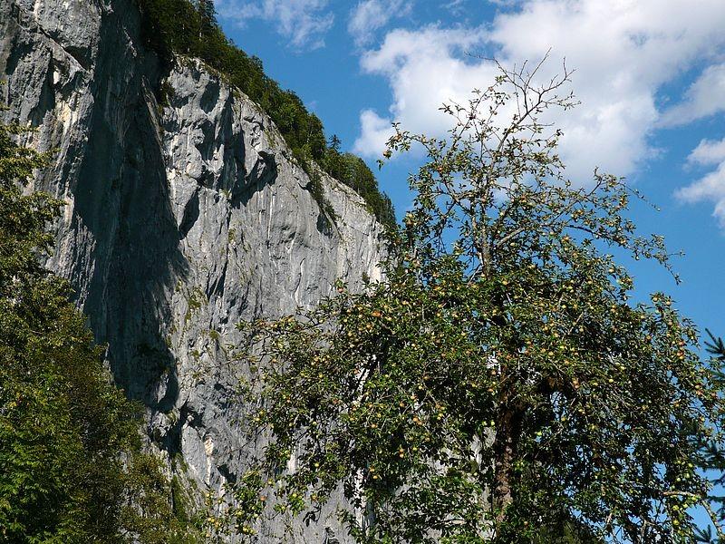 Die Gößler Wand vom Wanderweg Grundlsee -Toplitzsee