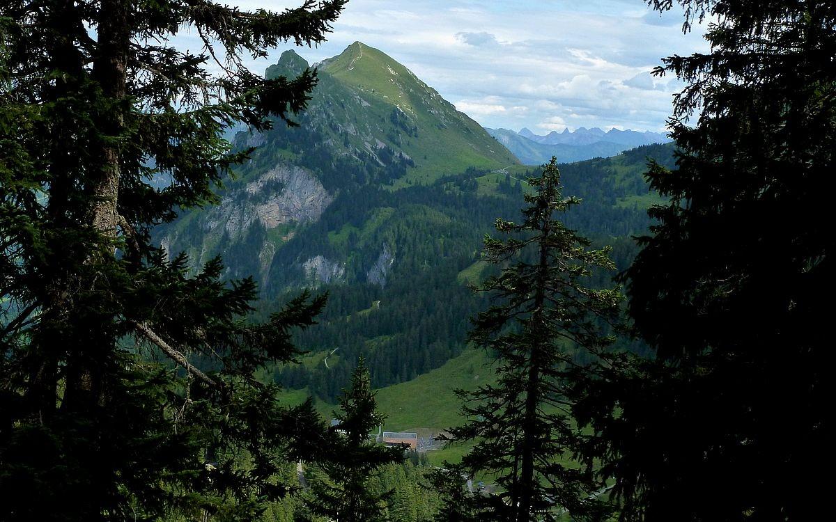 Blick durch eine schmale Waldschneise am Kojenkopf zur Kanisfluh und zum Heilbronner Weggebiet mit Gr. Krottenkopof, Trettachspitze und Mädelegabel