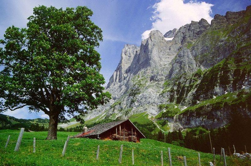 Wetterhorn von der Straße zur Großen Scheidegg. In der Flanke des Wetterhorns verläuft von links nach rechts der Anstiegsweg zur Glecksteinhütte