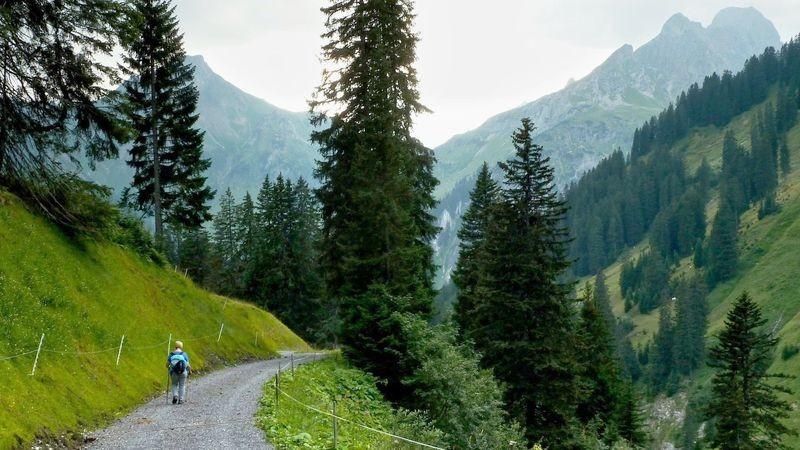 Im Weidegebiet der Sulzalpe Richtung Oberboden. Hinten Hochkünzelspitze