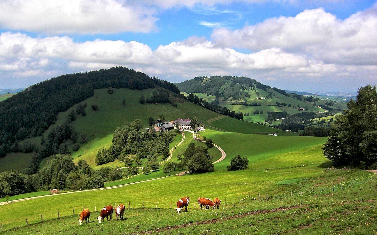 Abstieg von der Lindaumauer zum Hochramskogler nach dem Waldsteig