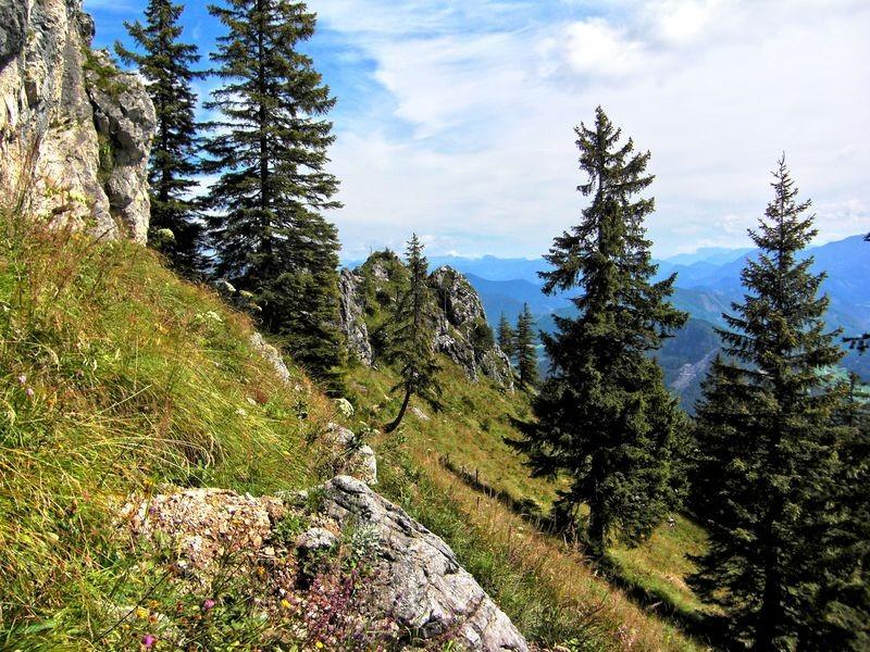 Der Anstieg vom Sandgatterl zum Gipfelkreuz beträgt etwa 1 km.