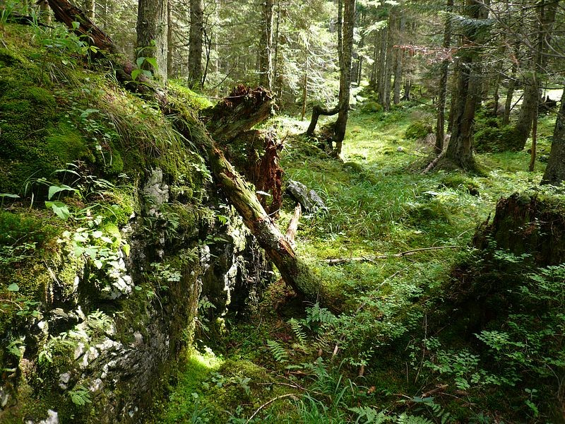 Im Wald bei der Ebenalm auf Pilzsuche unterwegs