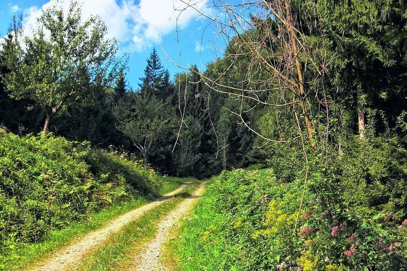 Unterer Aufstiegsweg zum Hieselberg