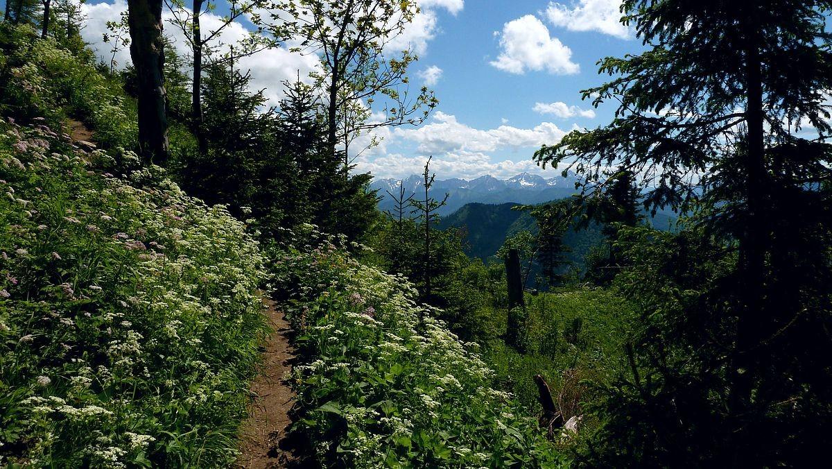 Steig von der Ennser Hütte zum Almkogel