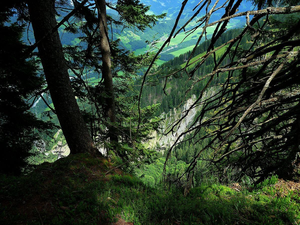 Der steile lange Tobel des Dürrenbachs vom Felskopf westlich der Roßstelle