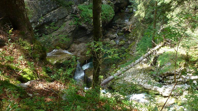 Passage im Wald beim Abstieg.