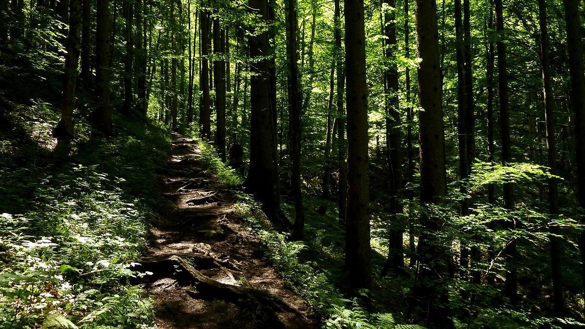 Schattiger Anstiegsweg 492 zwischen Parkplatz Bamacher und Jagdhütte