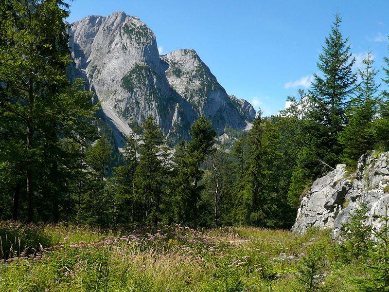 Kleine Waldwiese und Gosaukamm in der Umgebung der Ebenalm