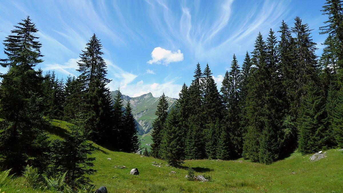 Auffallend gruppierte Federwolken vom Themenweg Klangraum Stein