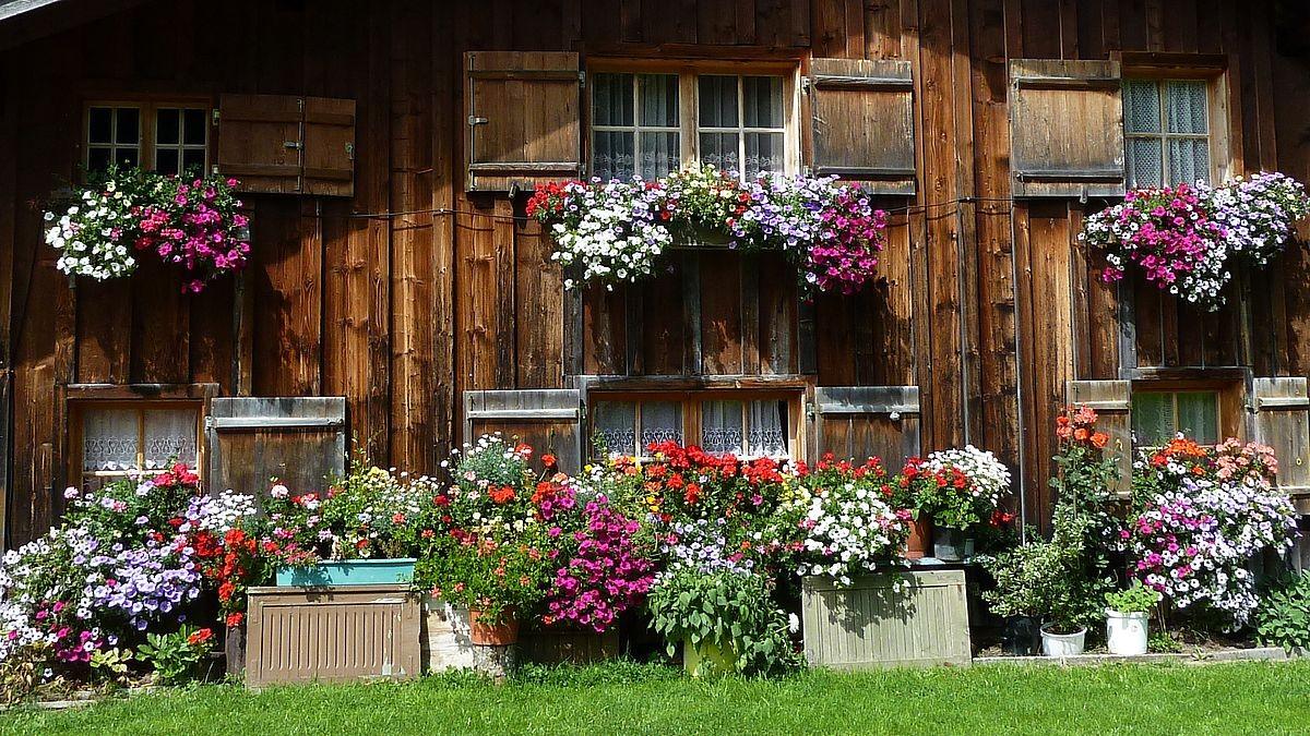 Blumengeschmückte Fassade der Alphütte Vordersteinbild Vorsäß