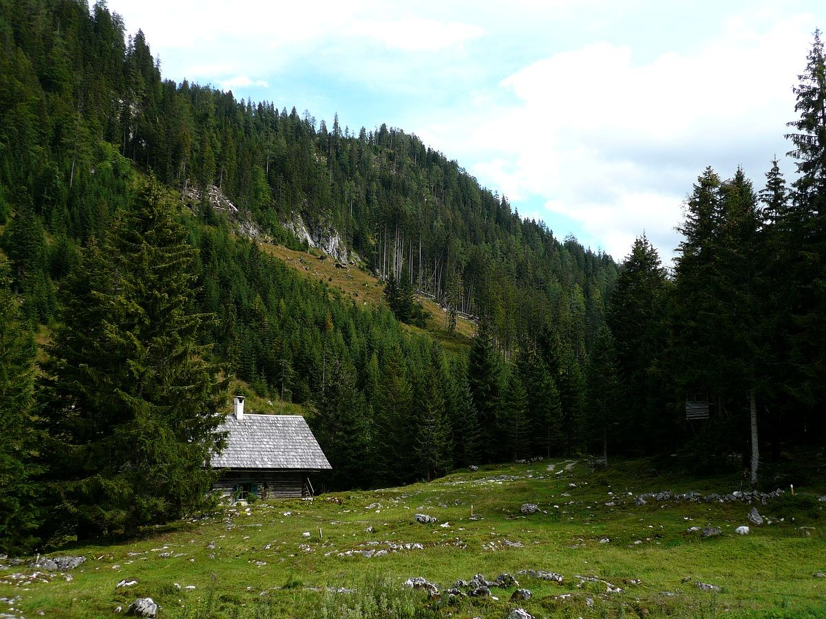 Die Waldwiese bei der Ebenalm mit kleiner Jagdhütte