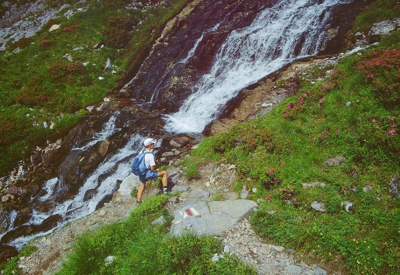 Steig vom Gamchi zur Gspaltenhornhütte. Alpenrosen über Alpenrosen.