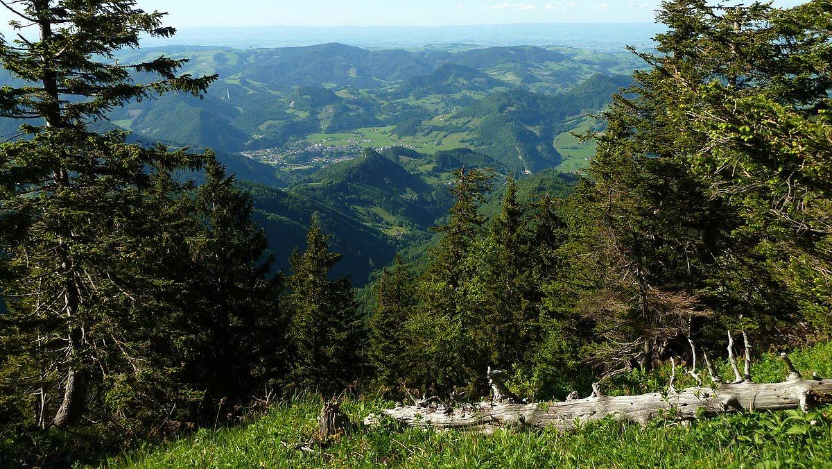 Blick vom Brunnbacheck auf Großraming