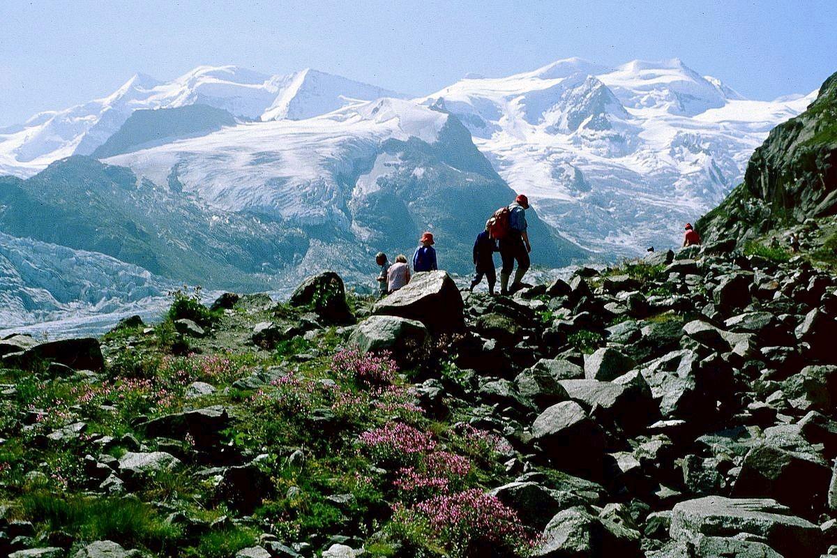 Auf der Seitenmoräne entlang zur Bovalhütte. Vorn Zwergweidenröschen.